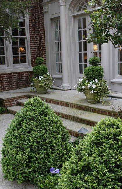 Best 25 boxwood planters ideas on pinterest outdoor Plants next to front door