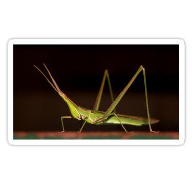 Green Grasshopper by StickerNuts