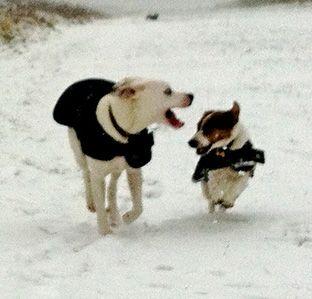 Dogwalks Brighton – Dog Walking, Doggy Daycare, Dog Boarding