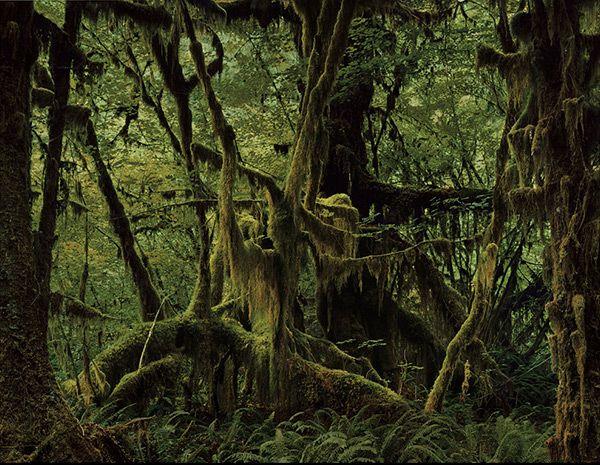 Taryn Simon. The Hoh Rain Forest, Washington.
