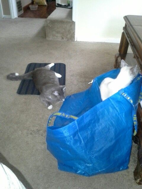 Ikea .99 cent floor mat..great for scratching.  .59 cent bag great for playing.