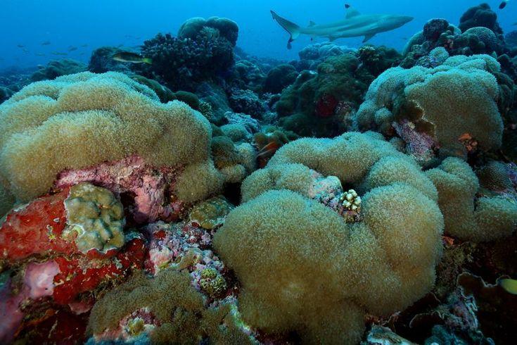 Seychellen kündigen Meeresschutzgebiet von Größe Großbritanniens an Das neue Schutzgebiet soll den Inselstaat vor illegaler Fischerei schützen und die Ökosysteme erhalten. #Seychellen #Naturschutz #Umwelt