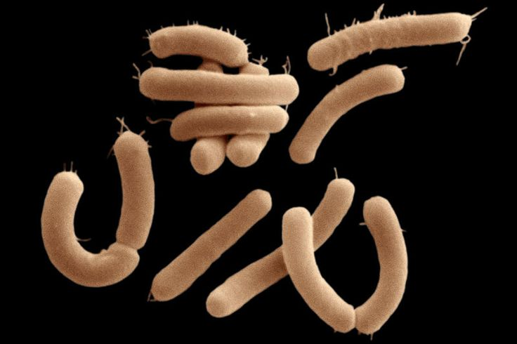 Gut bacteria consume GABA, a molecule crucial for calming the brain - could help explain why the gut microbiome seems to affect mood.