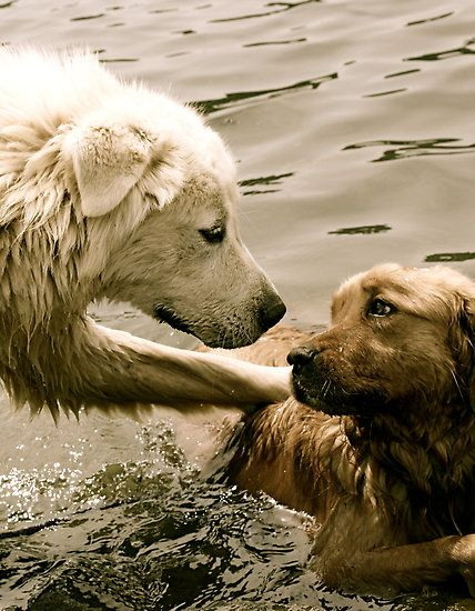 i have no words... <3: Best Friends, Animal Baby, Eye Contact, Pet, Baby Animal, Help Hands, Baby Dogs, Baby Cat, Golden Retriever
