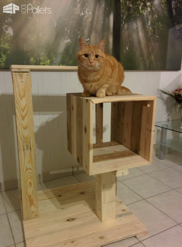 Petite Pallet Cat Tree / Arbre à Chat Give your furry friend a place to romp and play without destroying your furniture. Make thisPetite Pallet Cat Tree and watch kitty have lots of fun! Petite Pallet Cat Tree: First, find two pallets and dismantle them. Next, we sanded them all to prevent any kitty injuries. Then, we cut them all to measure. To...