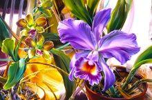 """Алмазная мозаика """"Домашние цветы"""""""