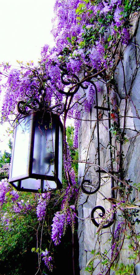 Beautiful wisteria entwined lamp • photo: via Sweet Lil Mz Mia