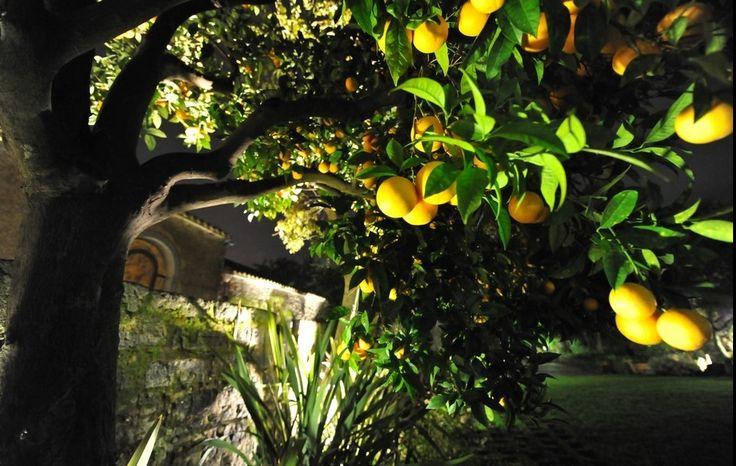 """""""Sai cos'è la nostra vita? La tua e la mia? Un sogno fatto in Sicilia. Forse stiamo ancora lì e stiamo sognando..."""" #LeonardoSciascia  www.lunario.eu"""