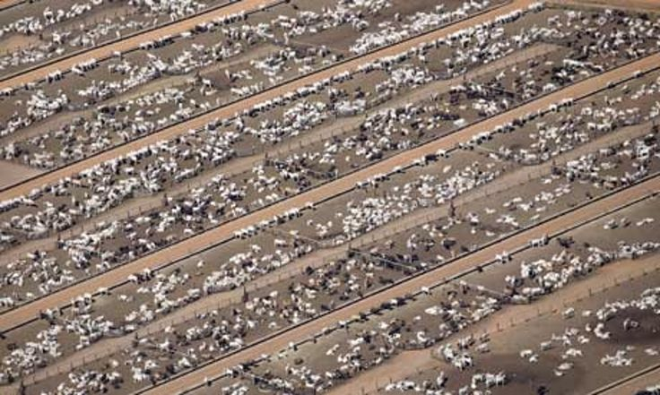 Lesser consumption of animal products is necessary to save the world from the worst impacts of climate change, UN report says