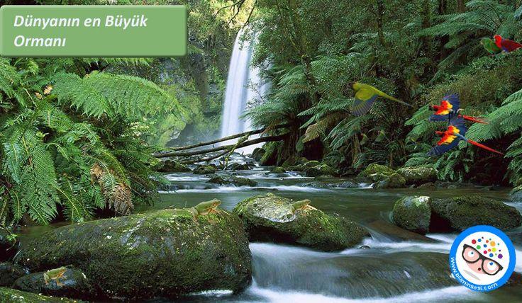 Dünyanın En Büyük Ormanı Hangisi Ve Nerde? - https://www.biliminsesi.com/dunyanin-en-buyuk-ormani-hangisi-ve-nerde/ - amazon yağmur ormanı, dünyanın en büyük ormanı, en büyük orman, en büyük orman nerede, yağmur ormanları - Peyman Mahouti