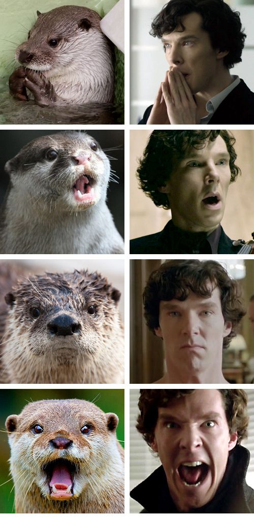 "Sherlotter Holmes ala Benedict Cumberbatch.      If you haven't watched BBC's ""Sherlock"" go do it now."