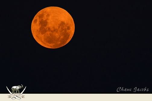 The dusty air produced a remarkable orange 'supermoon'. A supermoon is a full moon coinciding with the moon being nearest to earth – resulting in its largest apparent size, as seen from Earth. Photo taken by Camp Jabulani ranger Chane