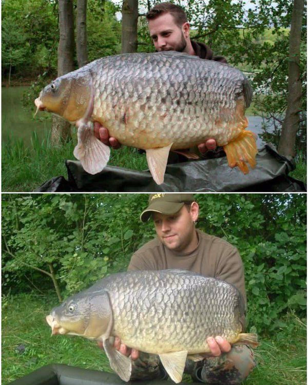 The 25 Best Carp Fishing Ideas On Pinterest Carp