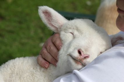 He will feed His flock like a shepherd...He will gather lambs in His arms....