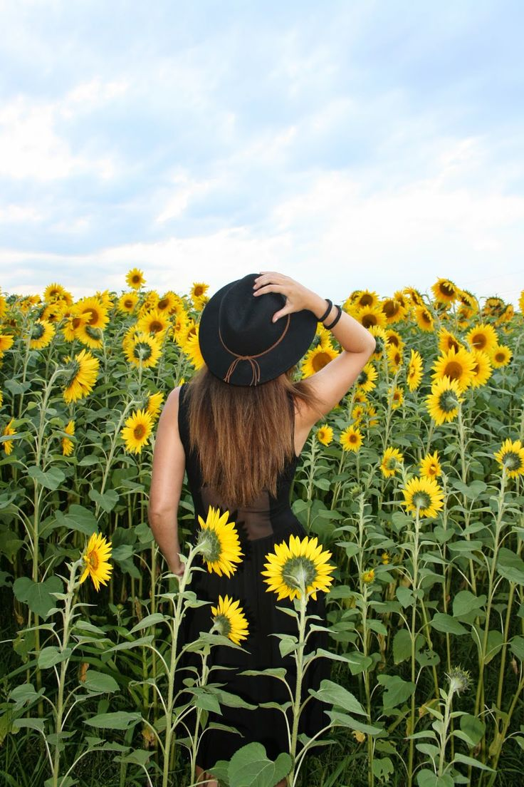 Campo Girasoles Sunflowers Asturias Ideas