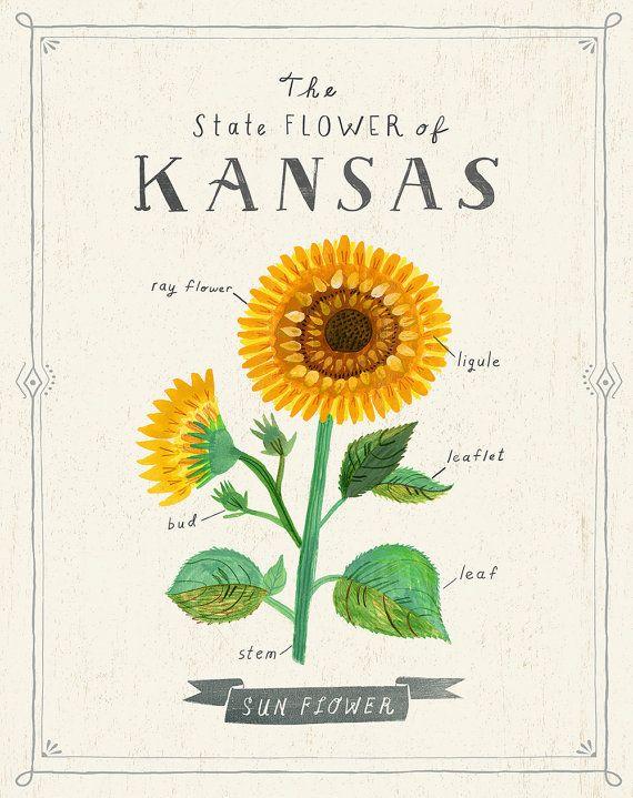 Kansas State Flower Print on Etsy By Sarah Walsh