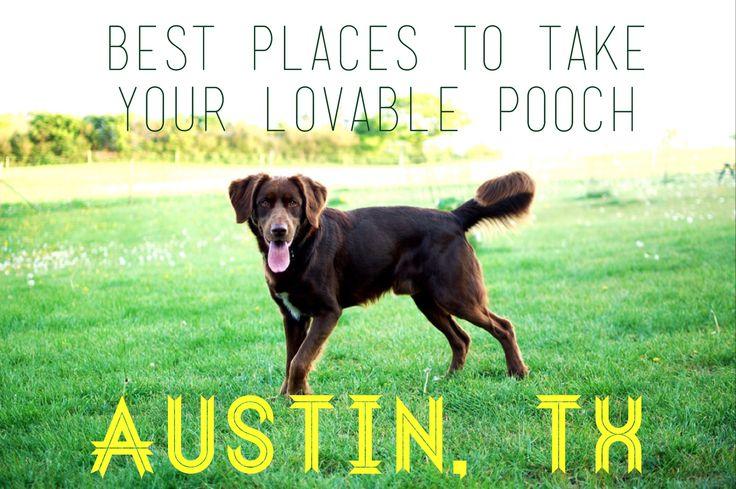 Dog Friendly Hotels Pasadena Texas