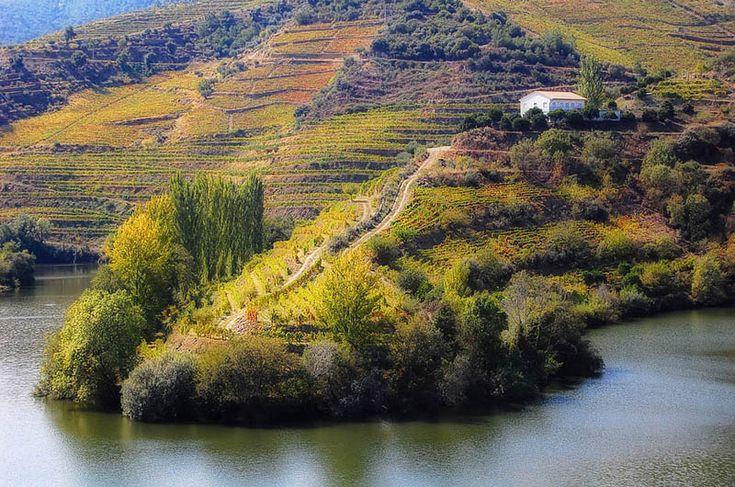 Tedo River Vineyard, Duoro Valley, Portugal