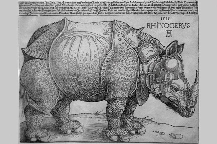 Rhinocerus 1515, by Albrecht Durer