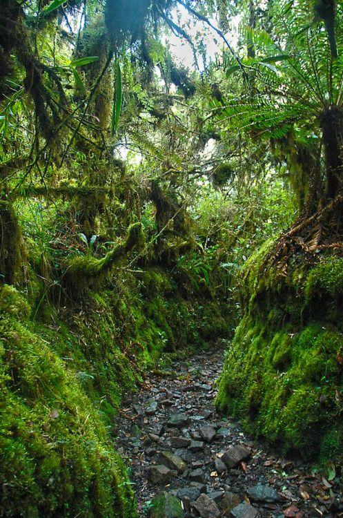 Camino de leyendas, Parque Nacional Chingaza / Colombia (by miguel vanegas).