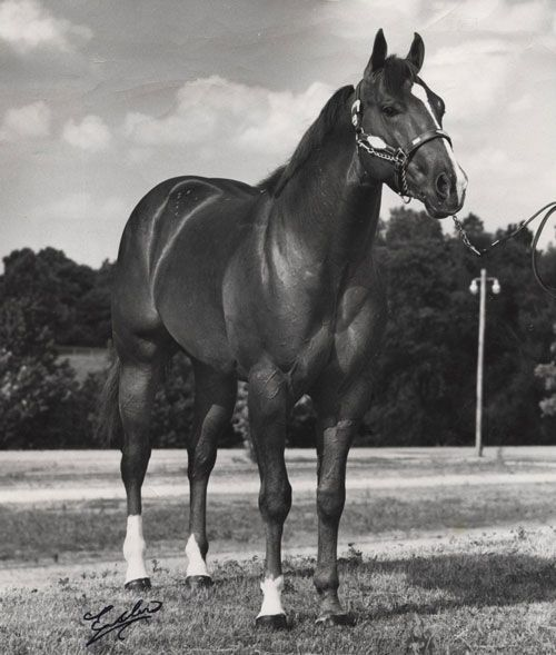 Hi Jo's Skip was a 1969 chestnut stallion by Hi Jo Bars and out of Skipity Queen. This versatile #QuarterHorse earned points in halter, reining, western pleasure and hunter under saddle, and became an #AQHA Champion as a three year old. #QuarterHorsebloodlines #AQHAProud
