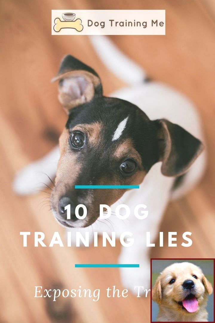 House Training A Puppy In Winter And Dog Behavior Degree
