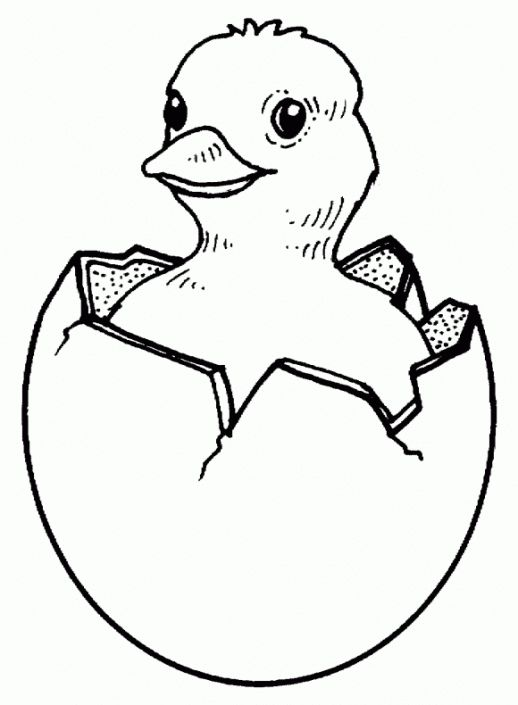 Easter coloring pages Baby chicks