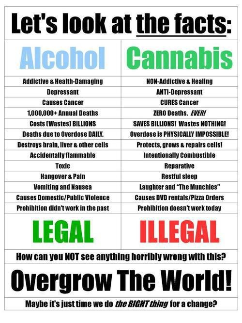 ALcohol vs. cannabis