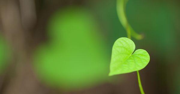 Liebt einander – 12 Kräuter als natürliches Aphrodisiakum