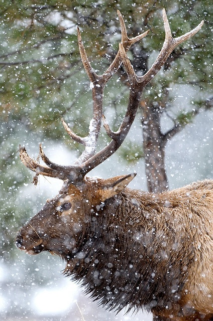 Rocky Mountain National Park, CO // photo by Mark Holden