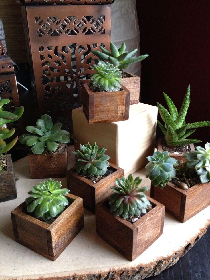 Plantas carnosas en cajitas de madera | Succulents in wooden boxes