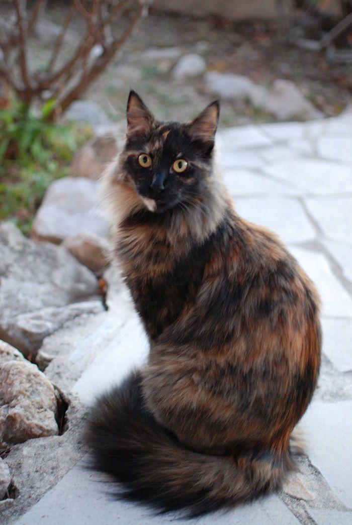 Cat -  - FIONA on www.yummypets.com