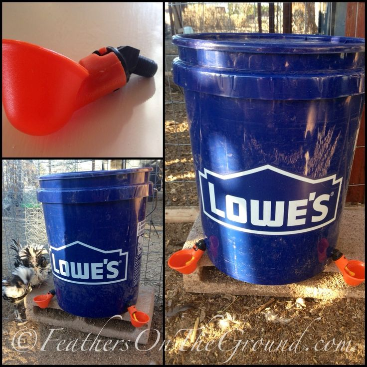 Bucket Chicken Waterer   Made from a 5 gallon bucket with lid and poultry water cups bought online. Total cost about $9-12 depending in if you use 1 or 2 cups   Drill holes in lower part of bucket with a 3/8 inch drill bit, screw in cups,  fill with water and close with a lid for the safety of your birds