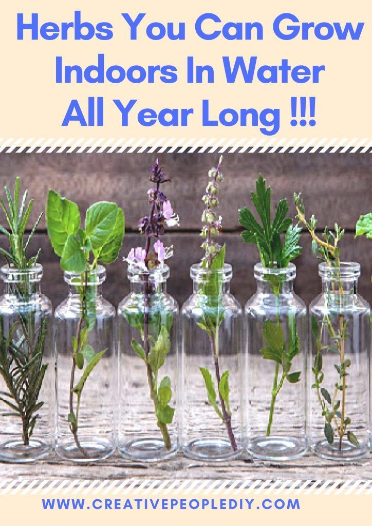Herbs You Can Grow Indoors Water All Year Long Growing