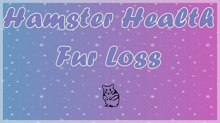 Park Art|My WordPress Blog_Hamster Losing Hair On Face