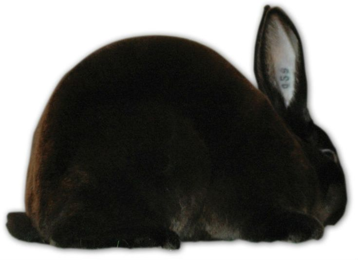 61 best Microfarm Animal Helps images on Pinterest Bun bun - resume rabbit cost