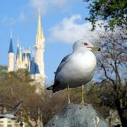 What Is the Cheapest Way to Get Disney World Tickets? | eHow