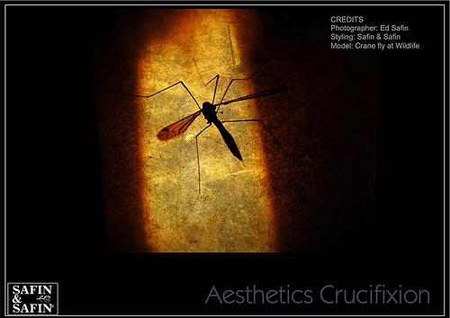 Aesthetics Crucifixion