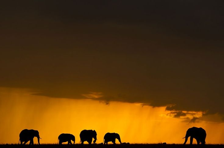 Sunrise over the Masai Mara National Reserve.