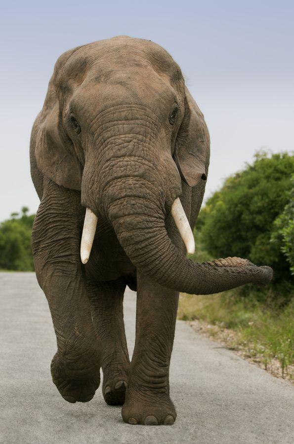 Pin By Jennifer Ruman Chesney On Animals Elephant Elephant Love Animals Beautiful