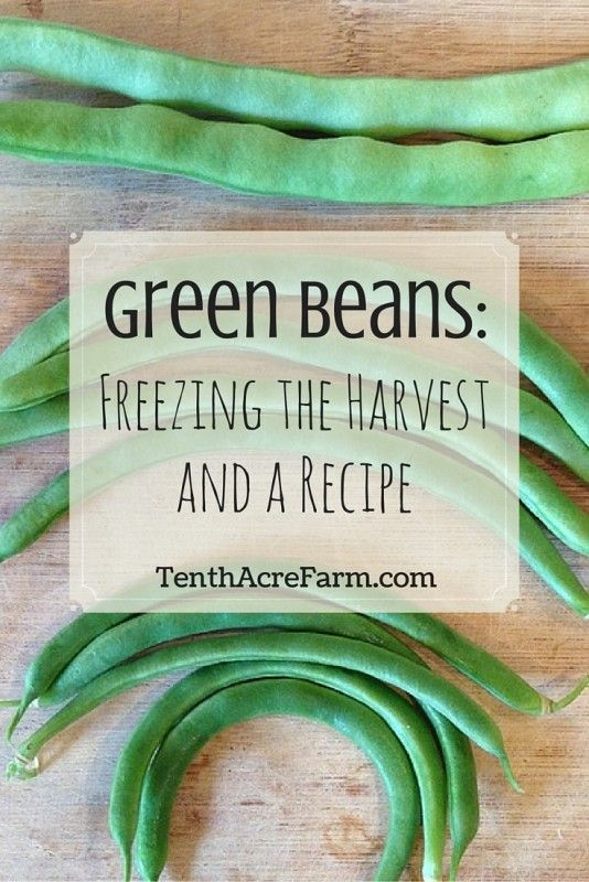 Green Beans: Freezing the Harvest and a Recipe: Here are some harvesting tips and how I preserved the harvest.