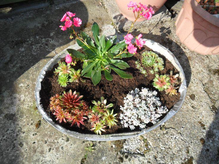 rots plantjes