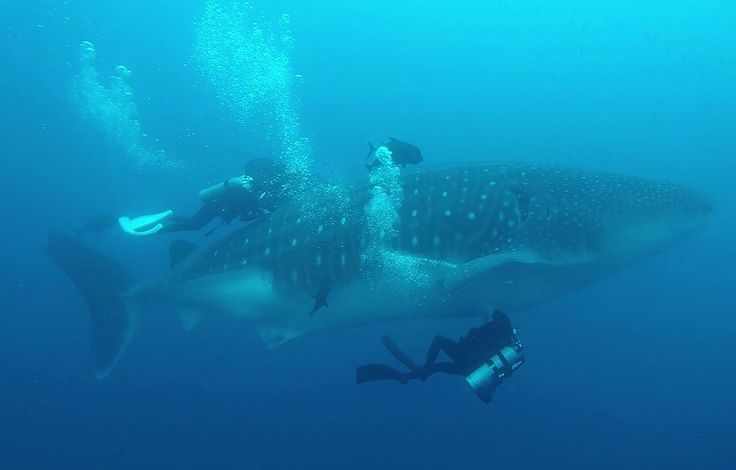 VIDEO. Galapagos: Un navire chinois intercepté avec plus de 6.000 requins, les marins condamnés à des peines de prison