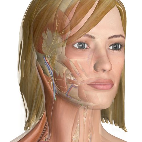 Anatomy of the body.  http://www.innerbody.com/