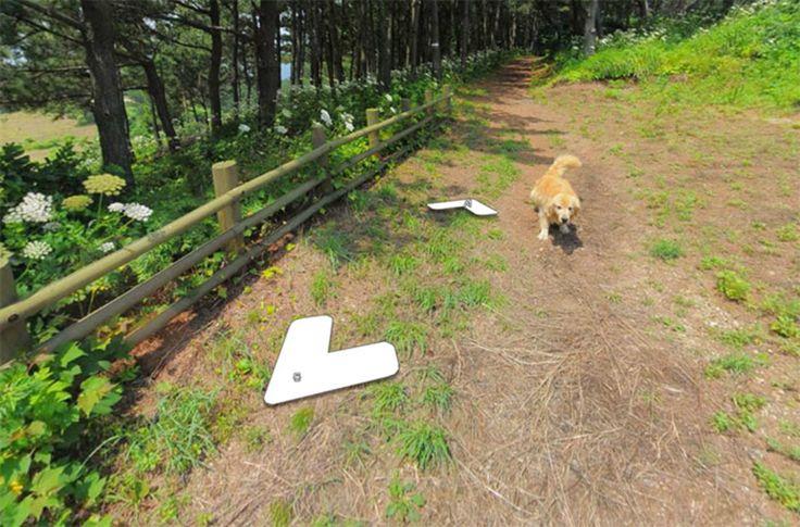 Dog That Won't Stop Following Street View Photographer Photobombs Every Photo - BlazePress