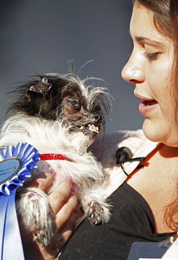 World's Ugliest Dog sheds light on animal abuse - Peanut's a prize to owner Holly Chandler, who says the little mutt's disfiguring burn scars have never affected his sweet, energetic personality.
