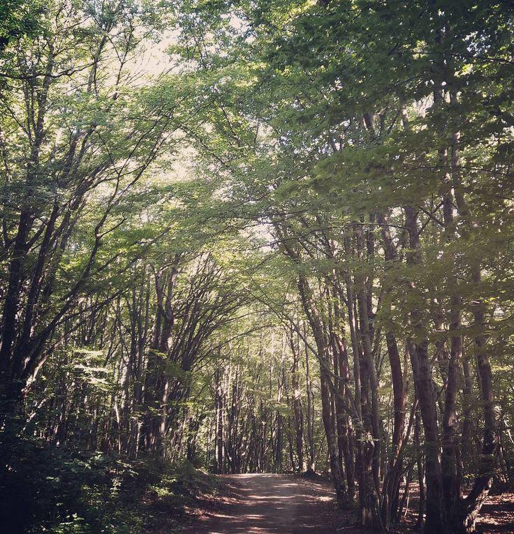 "Eva Marie (@evamariealterazioni) su Instagram: ""#forest #nature_perfection #breathe"""