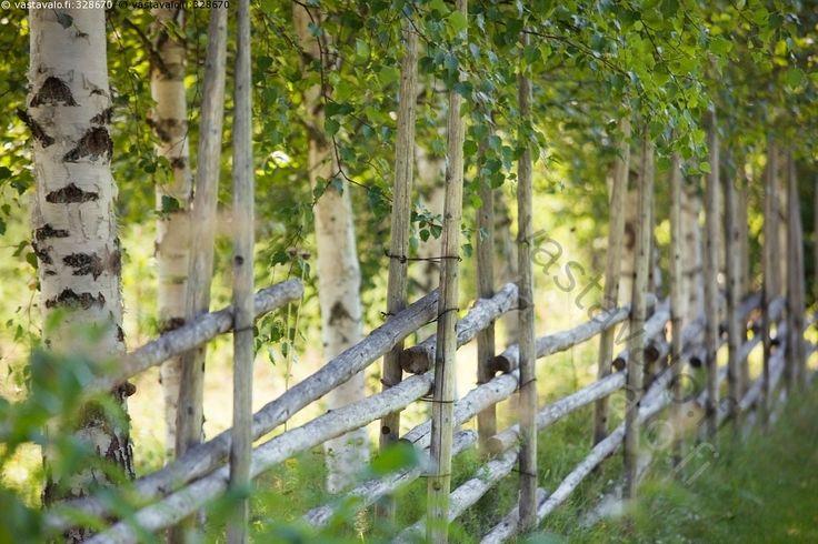 Aita - aita pisteaita seiväs seipäät heinäseiväs heinäseipäät koivu koivut puu puut kesä lämmin kesäpäivä kesäinen vihreä heinäseiväsaita. In Summer