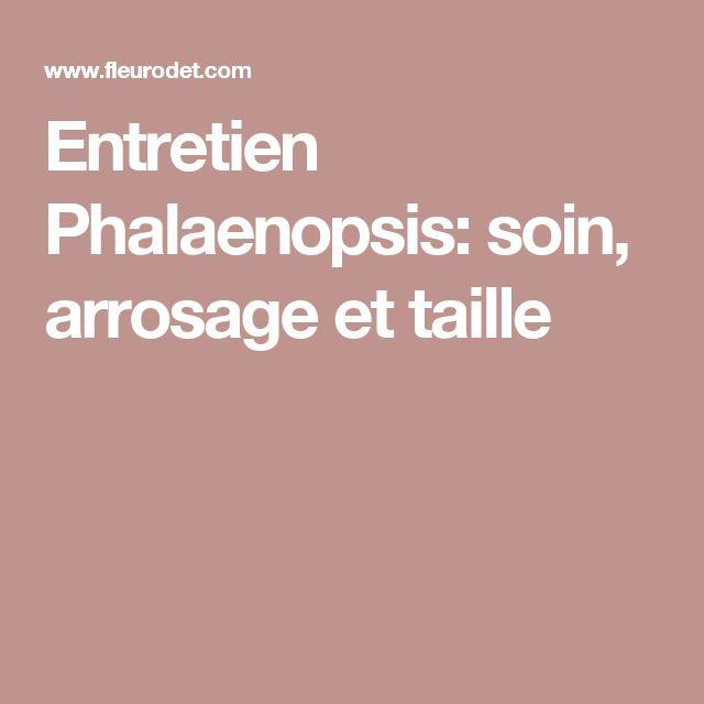 Entretien Phalaenopsis: soin, arrosage et taille