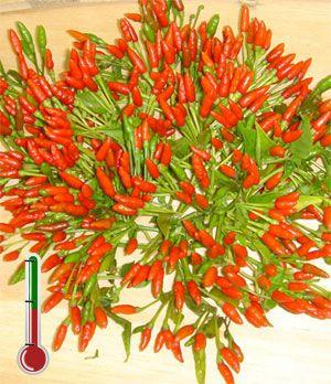 Pimentas Art | Pimenta Malaguetinha - 30 Sementes *Frete grátis*